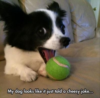 cheesy-dog-jokes-18