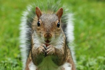 squirrel-2962847_640