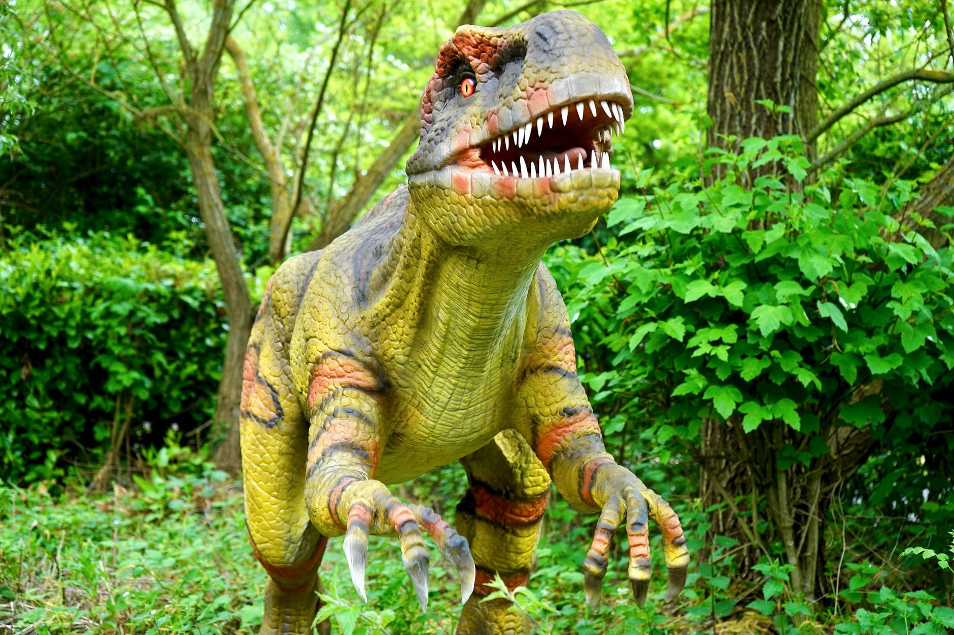 A picture of a T-rex